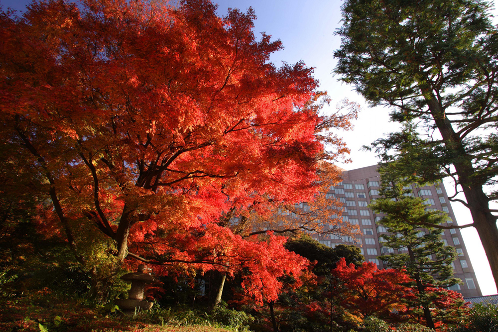 Four Seasons – Tokio, Japan
