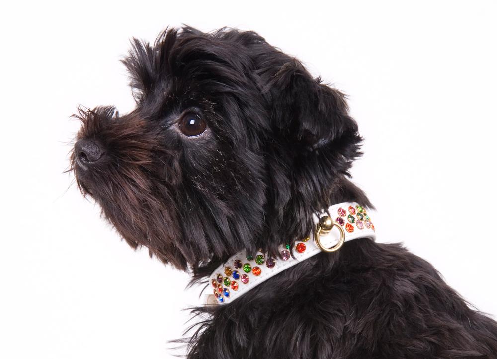 Koko von Knebel – Confetti Collar
